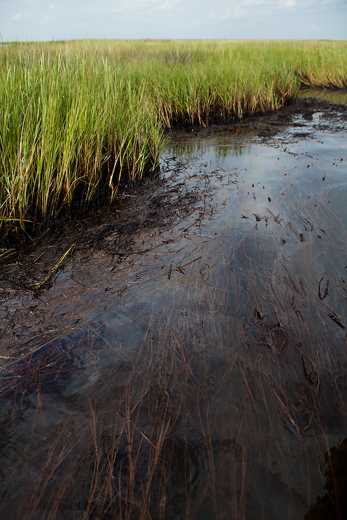 Sept. 19, 2010,, the day BP declared the Madaceno well dead, BP  oil from the spill that washed up in  the  Bay Jimmy in Plaquimines Parish remained.