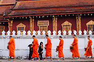 Buddhist Monks pass in front of Golden City Temple (Wat Xieng Thong) in the morning to receive alms of cooked rice in Luang Prabang, Laos.