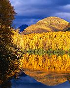 Autumn gold of paper birches covering peak of the Chugach Range reflected in Edmonds Lake, Edmonds Lake Park, Alaska.