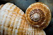 Sea Shells over a rockbed