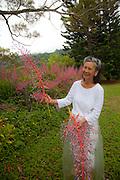 Bromeliad, Senator Fong's Plantation Garden