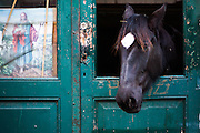 A horse stick his head out, a religious image next to it at the stabledoor