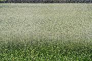 Nederland, Groesbeek, 24-2-2020 Een boer beregent zijn akker nat dmv een waterkanon. Het water wordt uit een put in de grond opgepompt en is dus grondwater. Waterdruppels in waterscherm . Foto: Flip Franssen
