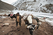 The small Kyrgyz caravan of Abdul Hameed and Ismail making its way down from the Pamir plateau to the lower valleys, to barter their animals for flour etc. They are loading their animals to continue their 6 days journey...At the Wakhi shepherd hut of Sap. .Trekking up the Wakhan frozen river, the only way up to reach the high altitude Little Pamir plateau, home of the Afghan Kyrgyz community.