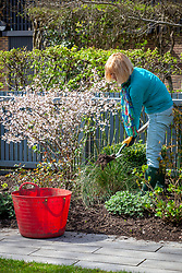 Mulching a border in spring