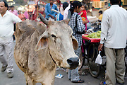 India, Delhi, The Main Bazaar area in Delhi.