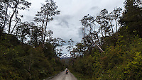 Cyclist in dense forest by Carretera Austral, Chile