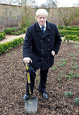 Boris Johnson tree planting  26th March 2008