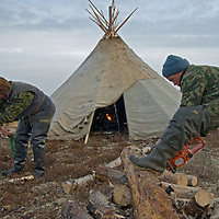 North of the Arctic Circle in Russia, members of a nomadic Komi reindeer herding clan chop and chain saw wood to heat their chum (tepee).