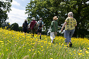 A group of walking friends on a public footpath, pass through a meadow of buttercups, on 13th June 2021, in Kemsing, Kent, England.
