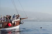 Boot met toeristen op zoek naar dolfijnen en walvissen voor de kust van Los Gigantes, Tenerife, Spanje  Boat with tourists searching for dolphins and whales in front of the coast of Los Gigantes, Tenerife, Spain