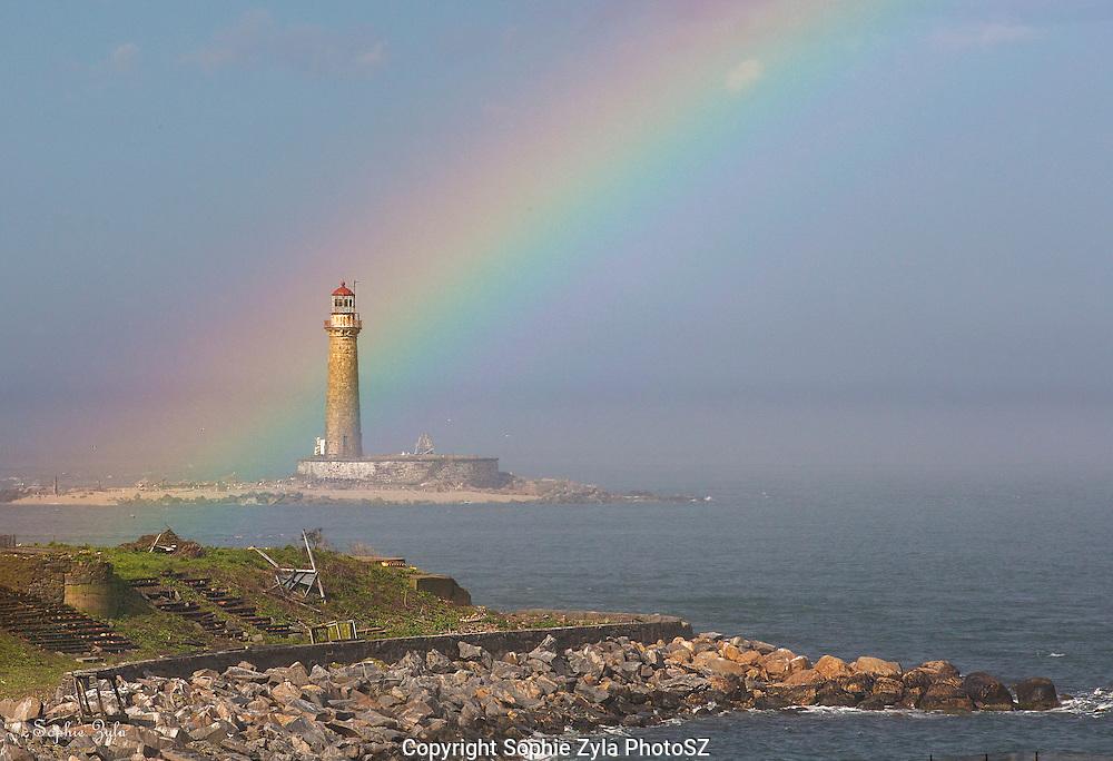 Little Gull Rainbow Light