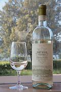 Orvieto Classico Wine, Barberani Vineyard, Baschi, Umbria, Italy, Tuscany & Umbria, Italy for Frommer's