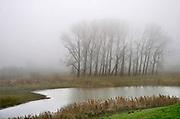 Nederland, Ooijpolder, 4-12-2019Mist in de polder.Foto: Flip Franssen