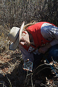 Sweetwater, TX - March 15: A snake hunters uses a mirror to local western diamondback rattlesnakes hiding under a rock during a snake hunting demonstration at the 51st Annual Sweetwater Texas Rattlesnake Round-Up, March 15, 2009 in Sweetwater, TX. During the three-day event approximately 10,000 rattlesnakes will be collected, milked and served to support charity.   (Photo by Richard Ellis/Getty Images)