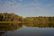 Aquidauana_MS, Brasil...Vegetacao proxima a um rio da fazenda Rio Negro no Pantanal...The vegetation next to a river in the Rio Negro farm in Pantanal...Foto: JOAO MARCOS ROSA / NITRO