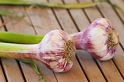 Two fresh garlic on a wooden teak table, white and violet bulbs and green stem Clos des Iles Le Brusc Six Fours Cote d'Azur Var France