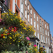 16.08.2016    <br /> Limerick City and County Council, Flowers, O'Connell Avenue, Limerick City. Picture: Alan Place
