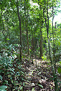 Rainforest, Barro Colorado Island, Panama, Central America