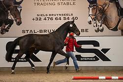 010, Simon van d'Abdijhoeve<br /> BWP Hengstenkeuring 2021<br /> © Hippo Foto - Dirk Caremans<br />  11/01/2021