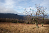 Wind blows through a Shenandoah National Park meadow as clouds hide the highest peaks.