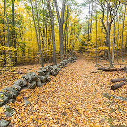 Fall in the forest along the Sweet Trail in Durham, New Hampshire. The Nature Conservancy's Lubberland Creek Preserve.