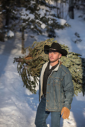 rugged cowboy carrying a Christmas Tree over his shoulder in the woods