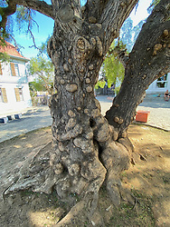 Trees With Knots