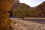 Wadi Shani AKA the Red Canyon, in the Eilat Mountains, Israel