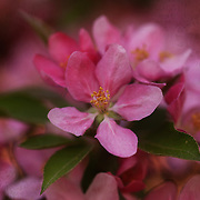 """Blossoms and Brocade"" <br />