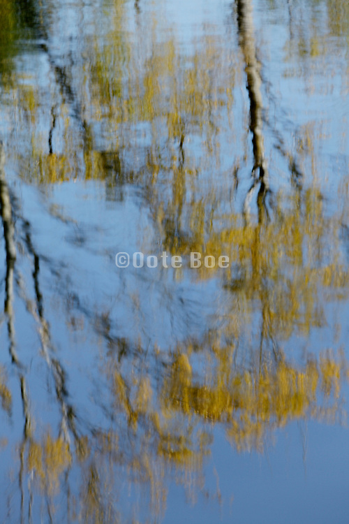 trees reflecting in water