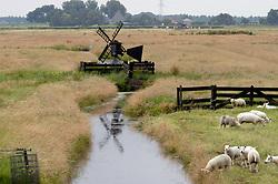 veeteelt, cattle breeding