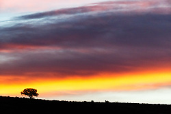 Lone tree at sunrise with dramatic clouds, Ladder Ranch, west of Truth or Consequences, New Mexico, USA.