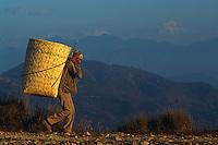 Nepal, porteur dans la region des Annapurnas. // Nepal, porter in the Annapurnas area.