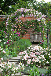 Rose arch and wooden bench in the rose garden at Mottisfont. Rosa 'Laure Davoust'  growing over metal arch. Rosa 'Pink Gruss an Aachen' in the border, Rosa 'Crépuscule' on wall beyond