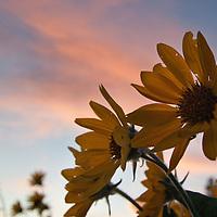 Wildflowers and Foliage