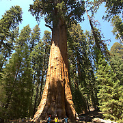 General Sherman. Giant Sequoias. Sequoia National Park. California, USA.