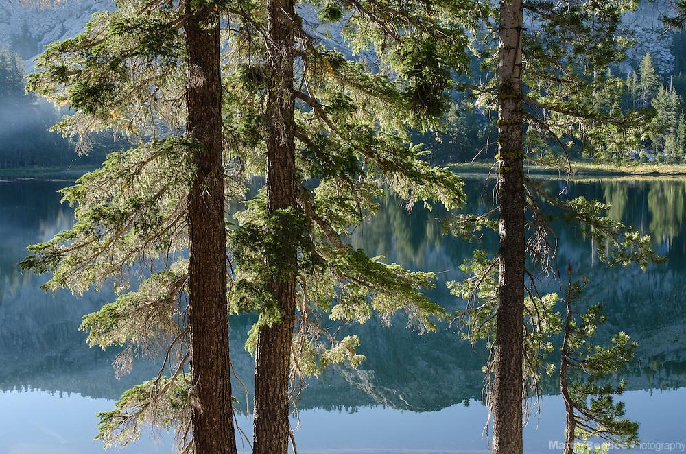 Pine trees and Bull Run Lake, Carson-Iceberg Wilderness, Stanislaus National Forest, California