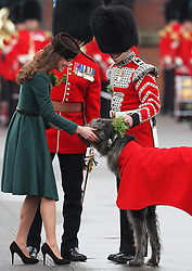 Catherine, Duchess of Cambridge pats  Conmeal the regimental mascot  after presenting sprigs of shamrock to members of the 1st Battalion Irish Guards during a St Patricks Day Parade at Mons Barracks, Aldershot, Saturday 17th March 2012. .Photo by: Stephen Lock / i-Images.