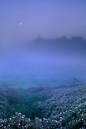 Moonset and morning mist in the flats between Arcata and Manila Humboldt County, CALIFORNIA