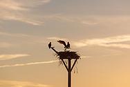 Sunset, Osprey, Pike's Beach Westhampton Beach, NY