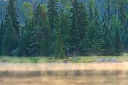 Wetland and boreal forest in morning fog<br />Kenora<br />Ontario<br />Canada