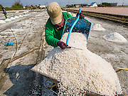 09 MARCH 2015 - NA KHOK, SAMUT SAKHON, THAILAND:  A worker puts salt into a wheelbarrow during the salt harvest in Samut Sakhon. The coastal provinces of Samut Sakhon and Samut Songkhram, about 60 miles from Bangkok, are the center of Thailand's sea salt industry. Salt farmers harvest salt from the waters of the Gulf of Siam by flooding fields and then letting them dry through evaporation, leaving a crust of salt behind. Salt is harvested through dry season, usually February to April. The 2014 salt harvest went well into May because the dry season lasted longer than normal. Last year's harvest resulted in a surplus of salt, driving prices down. Some warehouses are still storing salt from last year. It's been very dry so far this year and the 2015 harvest is running ahead of last year's bumper crop. One salt farmer said prices are down about 15 percent from last year.   PHOTO BY JACK KURTZ