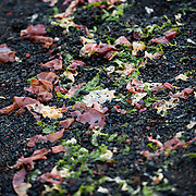 Seaweed washed up on the beach at Whalers Bay on Deception Island. Deception Island, in the South Shetland Islands, is a caldera of a volcano and is comprised of volcanic rock.