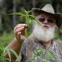 Marijuana in US