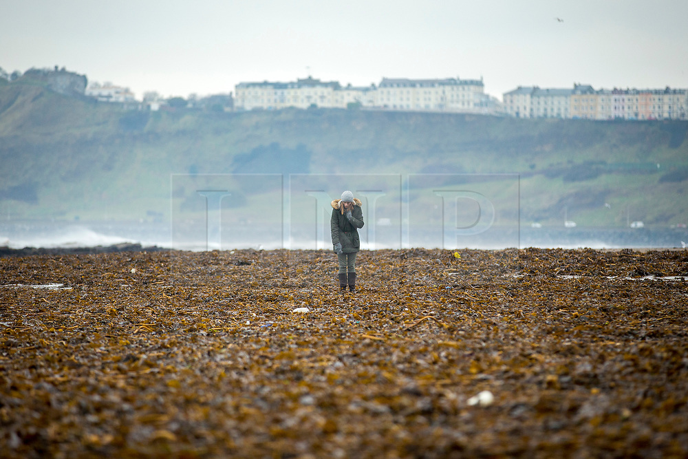 © Licensed to London News Pictures. 06/03/2018. Scarborough UK. A woman walks through the tons of seaweed washed on to the beach at the North Bay in Scarborough during storm Emma. Photo credit: Andrew McCaren/LNP