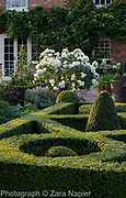 Buxus - box parterre in front of house with a white rose - Rosa 'Iceberg'? - September