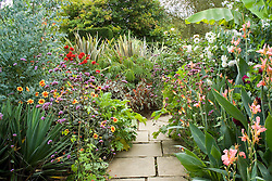 The exotic garden at Great Dixter. Planting includes Begonia 'Little Brother Montgomery', Begonia luxurians, Phormium 'Sundowner', Dahlia 'Wittemans Superba', Eucalyptus gunnii and Verbena bonariensis