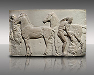 Releif Sculptures from the frieze around the Parthenon Block XV. From the Parthenon of the Acropolis Athens. A British Museum Exhibit known as The Elgin Marbles .<br /> <br /> If you prefer to buy from our ALAMY STOCK LIBRARY page at https://www.alamy.com/portfolio/paul-williams-funkystock/greco-roman-sculptures.html . Type -    Elgin    - into LOWER SEARCH WITHIN GALLERY box - Refine search by adding a subject, place, background colour, etc.<br /> <br /> Visit our ROMAN WORLD PHOTO COLLECTIONS for more photos to download or buy as wall art prints https://funkystock.photoshelter.com/gallery-collection/The-Romans-Art-Artefacts-Antiquities-Historic-Sites-Pictures-Images/C0000r2uLJJo9_s0