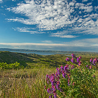 Wildflowers bloom on a ridge above Fort Peck Reservoir in Charles M. Russell National Wildlife Refuge, Montana